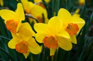 Photo Credit: www.freedigitalphotos.net per franky242